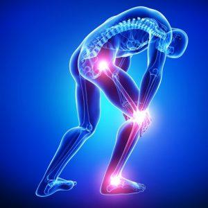 ossa e articolazioni